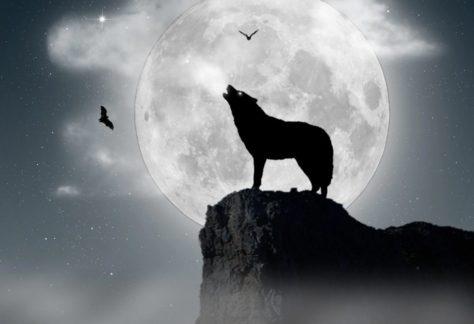 excursion luna llena 474x324 - home