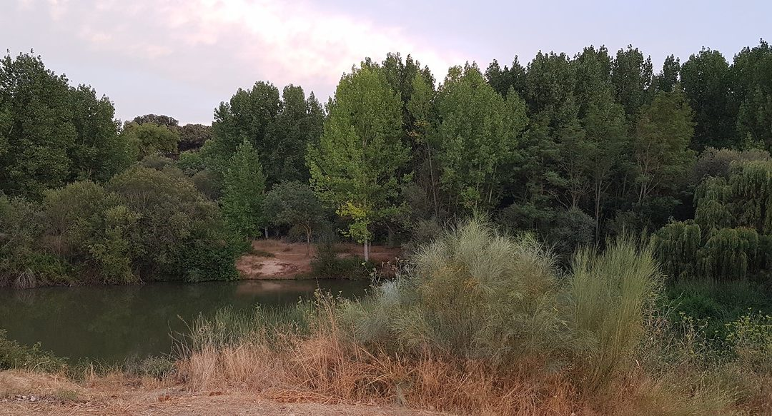 Atardecer, photowalking  y picnic en el Manzanares en El Pardo