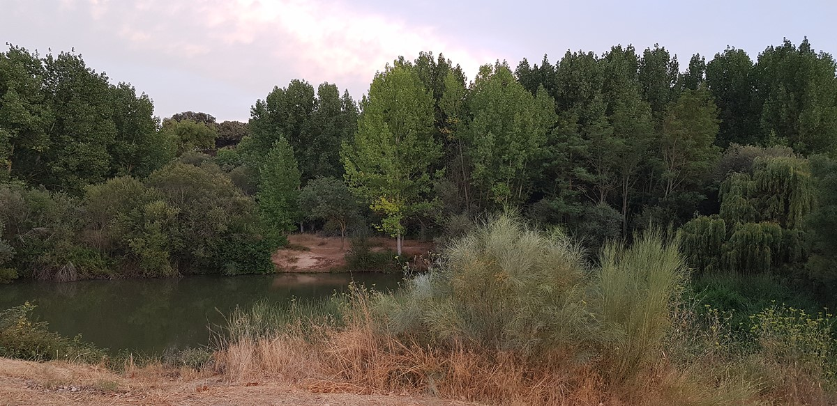 Río Manzanares en El Pardo